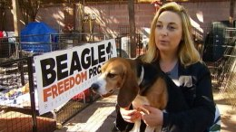 Beagle Freedom Project Wants to Bring Research Dogs to CA