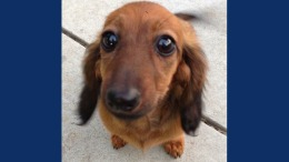 Dog Dies in Care of Calif. PetSmart Groomer