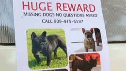 Five Bulldogs Stolen From San Bernardino Family