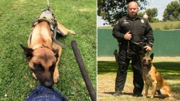 Officers Grief-Stricken After K-9 Killed in Standoff