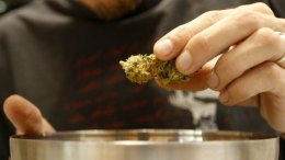 Voters Approve Medical Marijuana Measure D
