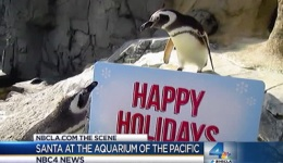 Weekend Events: Fishmas at the Aquarium of the Pacific