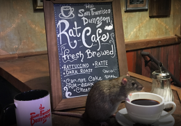Rat Café: Coming Soon to a Pop-Up Store Near You