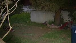 Newborn's Body Parts Found in Westmont Back Yard