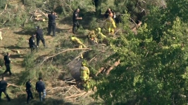 Children Injured by Falling Tree Had 'No Warning': Witness