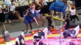 Startled Camel Carrying Kids Bucks at Pa. Circus, Injuring 7