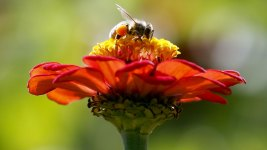 'Zombie Bee' Scourge Reaches Southern US