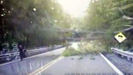Dashcam Shows Tree Fall on NJ Police Officer