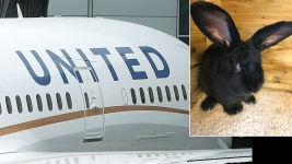 Lawsuit Filed Against United Airlines Over Death of Giant Rabbit