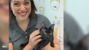Celebrate National Cat Day by Adopting or Fostering a Cat