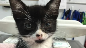 PHOTOS: Kitten Found in Glue Trap is Ready for Fur-Ever Home