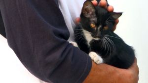 Kitten Rescued From Van Dashboard