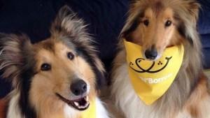 Hot Dawg Eating Showdown: A Fido Fundraiser