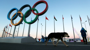 Sochi Strays, Costas' Eyes — and Detroit? Unexpected Olympic Stars Born