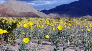 Desert Spring Show: Almost Flower Time