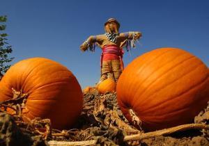 Irvine Park Railroad's Great Pumpkin Weigh-Off