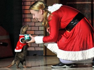 SeaWorld's Christmas Celebration
