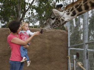Play Days at the San Diego Zoo