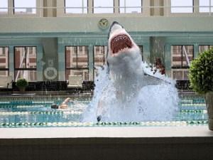 Swim with the (Movie) Sharks