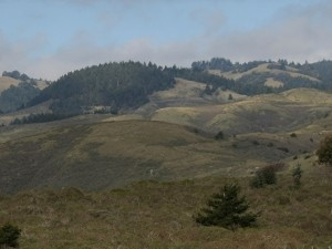 Veterans Honored with Mt. Tam Overlook