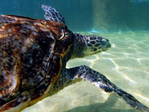 Sea Turtle Bay to Open