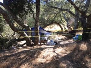 Campers Injured by Falling Tree in Mount Diablo State Park