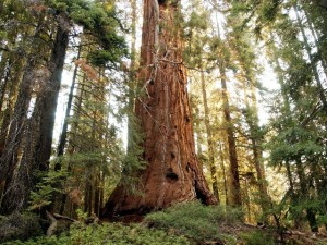 Sequoia Park to Waive Fee for Holiday
