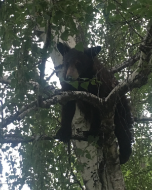 Bear Makes Special Appearance at Yucaipa Home