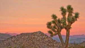 Shutterbugs, Enter the Joshua Tree Photo Contest