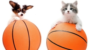 Cuties Hold Court at Pasadena Humane's March Madness