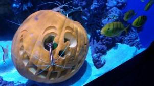Haunted Aquarium: Sea Monster Mash