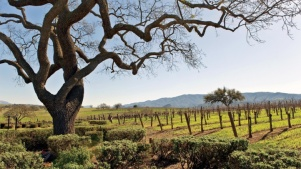 Travel Fans: Santa Barbara County Popping Up in Glendale