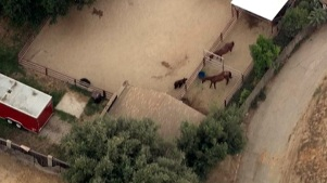 Bear Surprises Horses in Southern California Neighborhood
