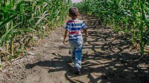 Opening: Big Horse Corn Maze