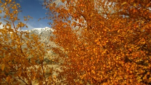 California Fall Color Is Live and Looking for Leaves