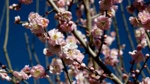 Huntington: Parade of Blooms Ahead
