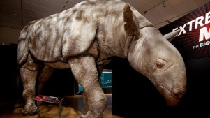 'Extreme Mammals' Stomp for NHM