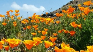 Poppy Bloom: 'Real Start' Nearly Here