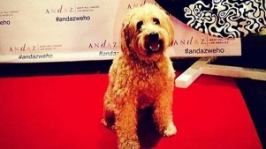 National Dog Day: Red Carpet WeHo Adoption