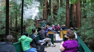 Experience Rainforest Wow, with Roaring Camp Railroads