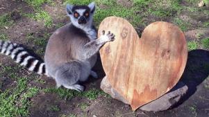 A Very Valentine's-y Visit to Safari West