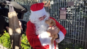 Gussy Up Your Pup and Kit for Santa Pet Pics