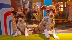Sweet: San Francisco SPCA Holiday Windows