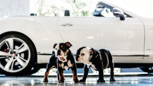 Puppy Ambassadors: London West Hollywood Debut