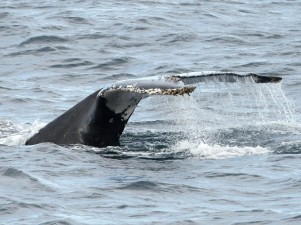 Dana Point's Whale Moment