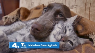 Fund the Shelters: Donate to Local Animal Shelters in Need