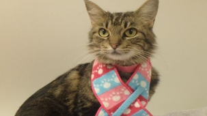 Pet of the Week: Missy