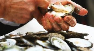 Shuck & Swallow Oyster Showdown, in Santa Barbara