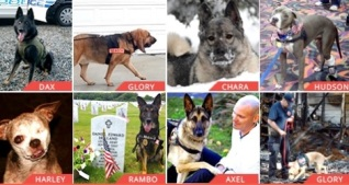 Hero Dog Awards: Nominations Are Open