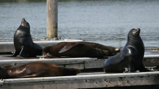 Rising Number of Sea Lions in California Treated for Poisoning